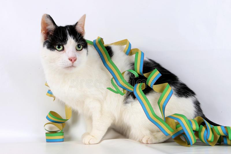 Beautiful cat with colorful paper streamer royalty free stock photos