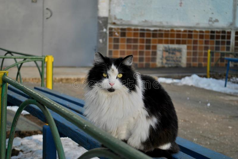 A black and white cat sits on a bench at the entrance of an apartment building. A black and white cat sits on a bench at the entrance of an apartment building stock images