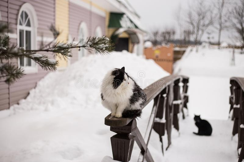 Black and white cat is sitting on wooden railing near the country house outdoors at winter stock photos