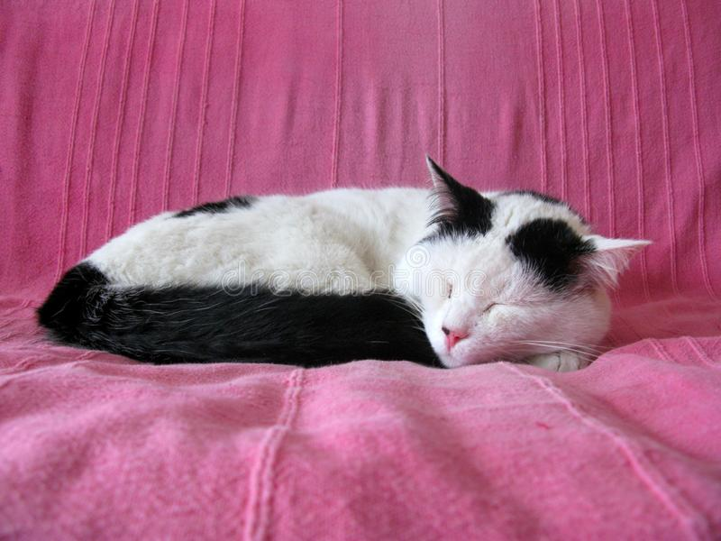Black and white cat sleeping stock images