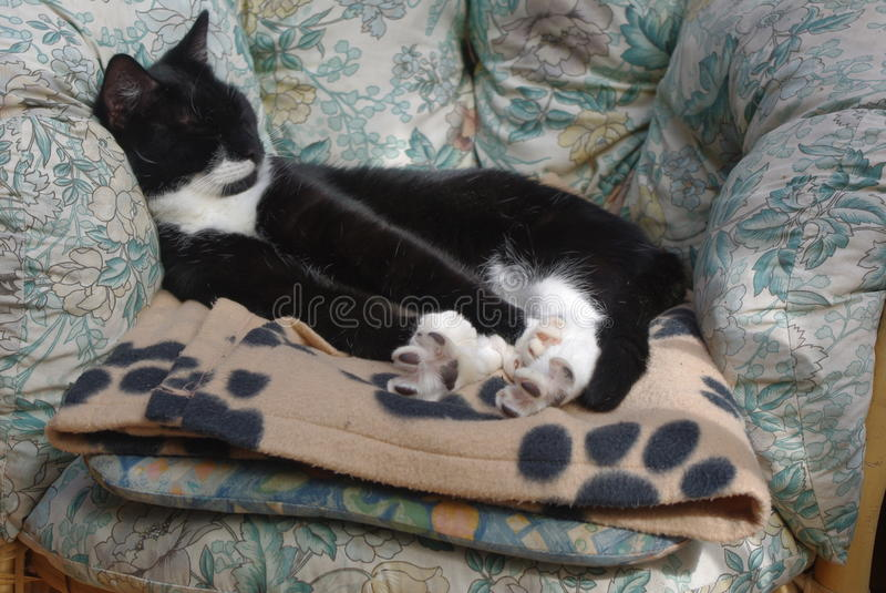 Black and White Cat stretching royalty free stock image