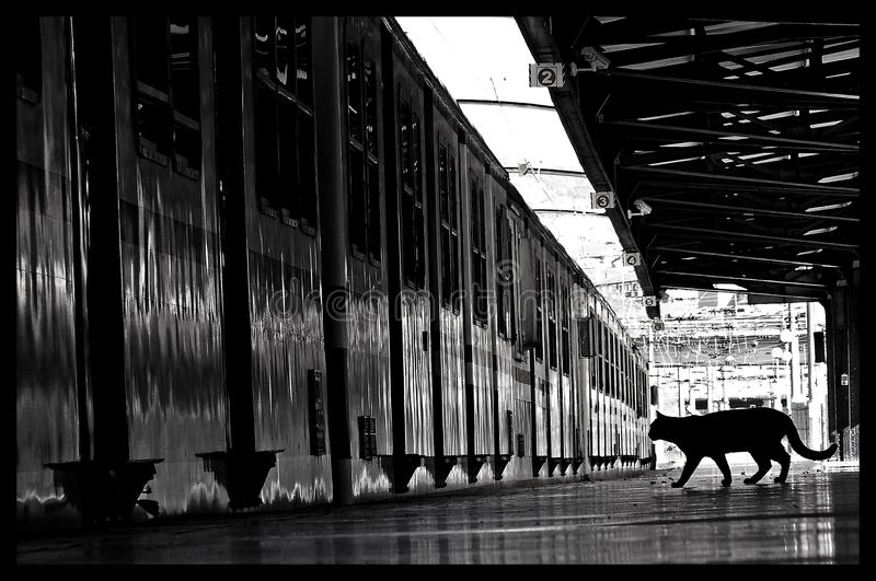 black and white cat train royalty free stock photo