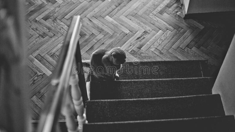 Black and white royalty free stock photo