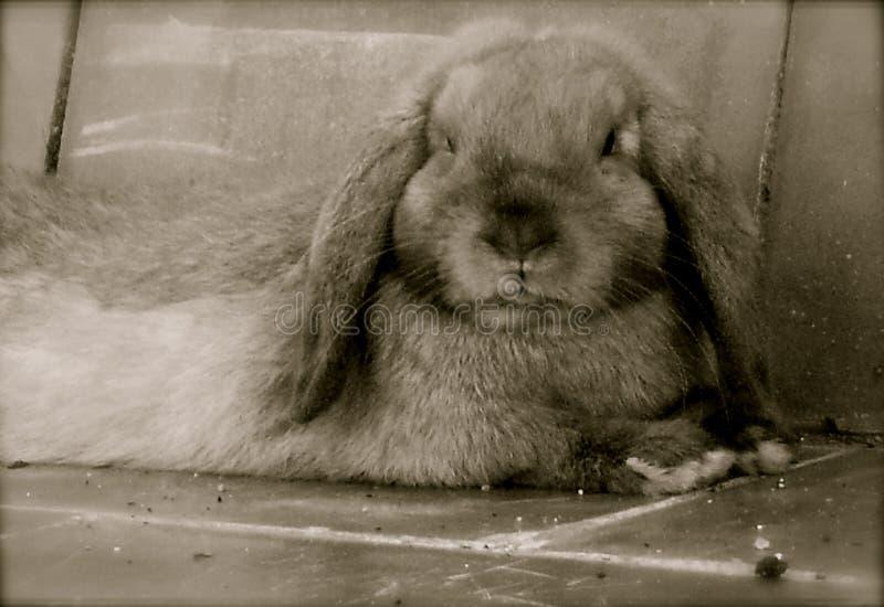 Black/white Chewy royalty free stock photos