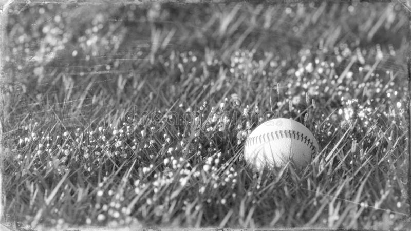 Black and white close up shot of old baseball lying in the grass. royalty free illustration