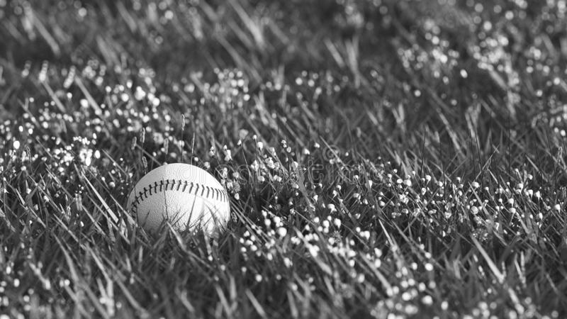 Black and white close up shot of old baseball lying in the grass with shallow depth of field stock illustration