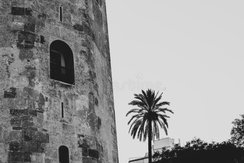 Black and white close up of Torre del Oro and a palm tree, Sevilla royalty free stock photos