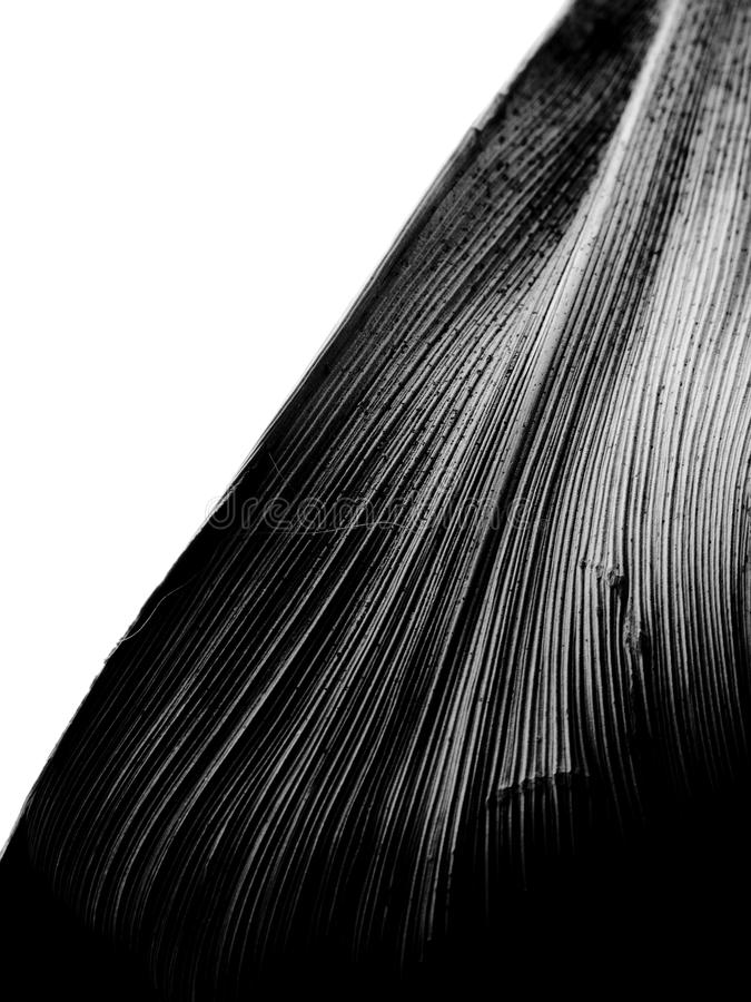 Black and white closeup macro of a vertical leaf shot diagonally with sharp lines stock photo