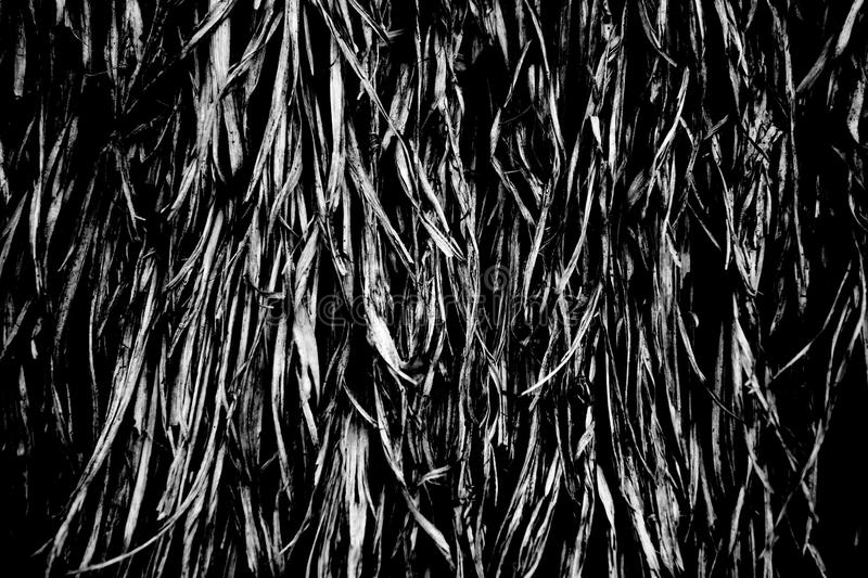 Black and white color texture pattern abstract background can be use as wall paper screen saver brochure cover page or for present. Ations background or article stock image