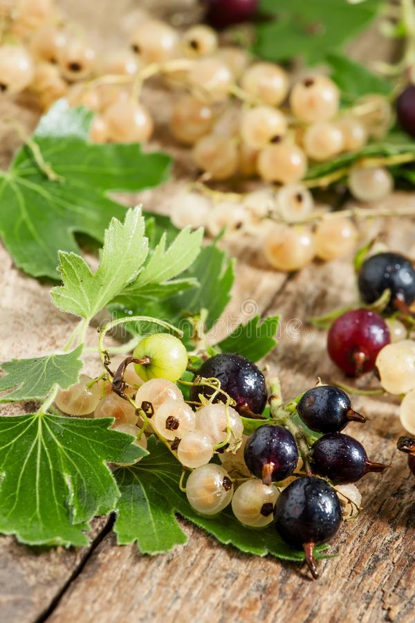 Black and white currant with leaves on old wooden background, se royalty free stock images