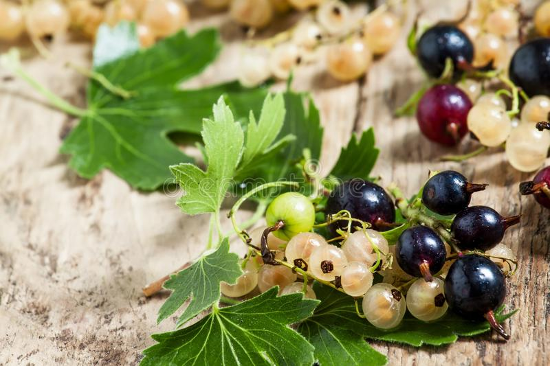 Black and white currant with leaves on old wooden background, se royalty free stock photo