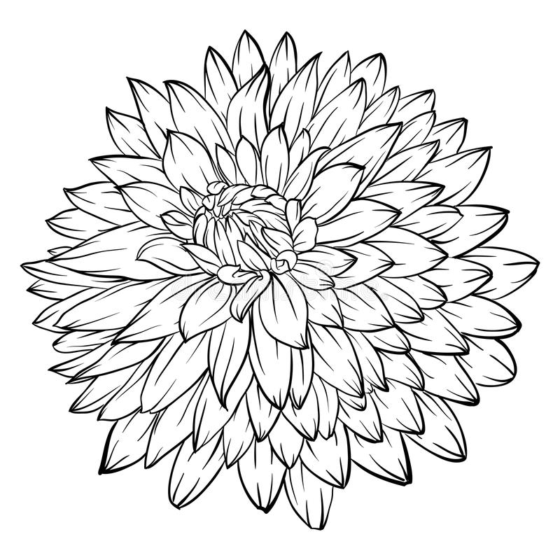 Black and white dahlia flower. Beautiful monochrome black and white dahlia flower on background. for greeting cards and invitations of the wedding, birthday stock illustration