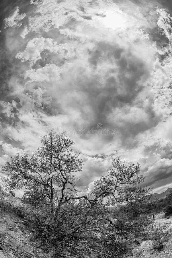 Black and White Desert Scene royalty free stock image