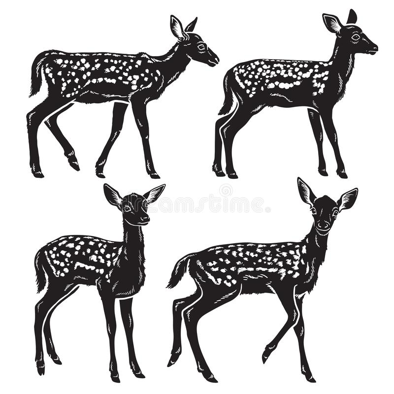 Black and white detailed silhouettes of young baby deer royalty free illustration