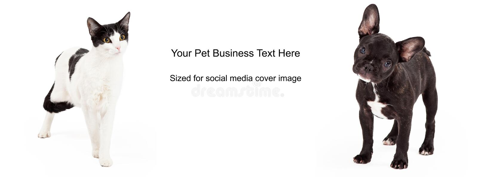 Black and White Dog Cat Cover Photo. A dog and a cat with black and white fur standing against a white background. Image cropped to the size of a social media stock image