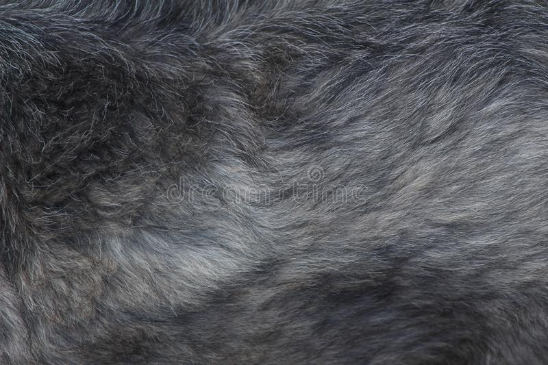 Black and white dog hair texture. Color black and white and medium size royalty free stock photo