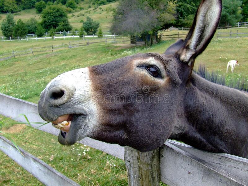 Black And White Donkey Head On A Grey Wooden Fence Nearby Green Grass Field Free Public Domain Cc0 Image