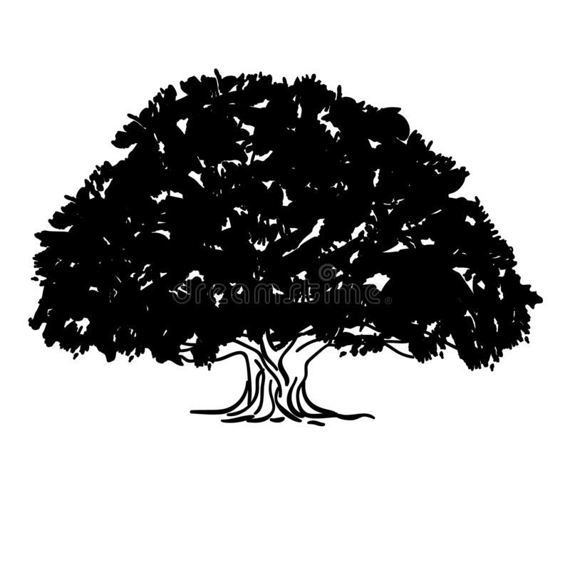 Black and white drawing of an ash tree silhouette of a sprawling crown tree. Vector illustration royalty free illustration