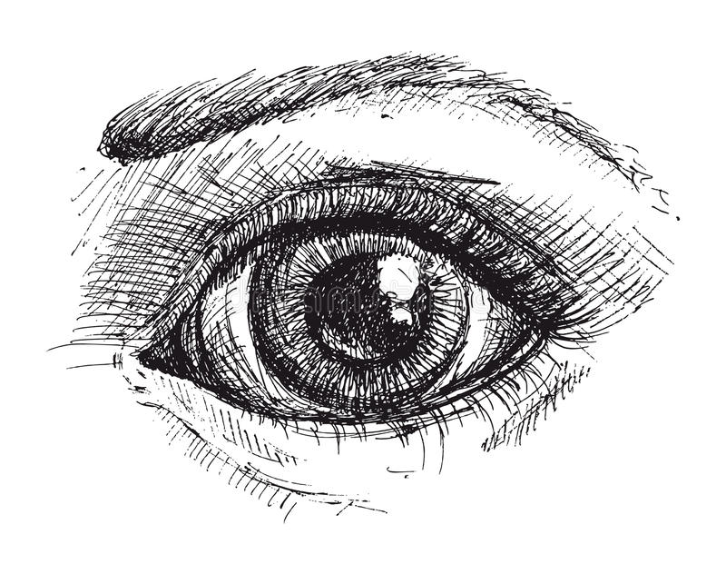 Black and white drawing of eye. And eyebrow . Vector illustration