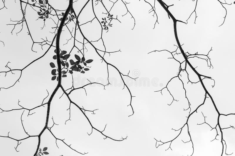 Black and white of dry twigs stock photos