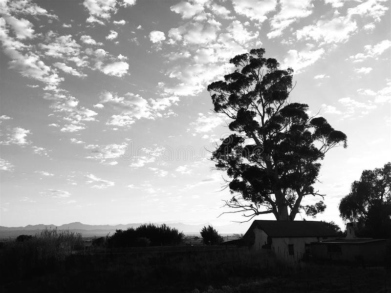 Black and White Early morning landscape with tree stock photography