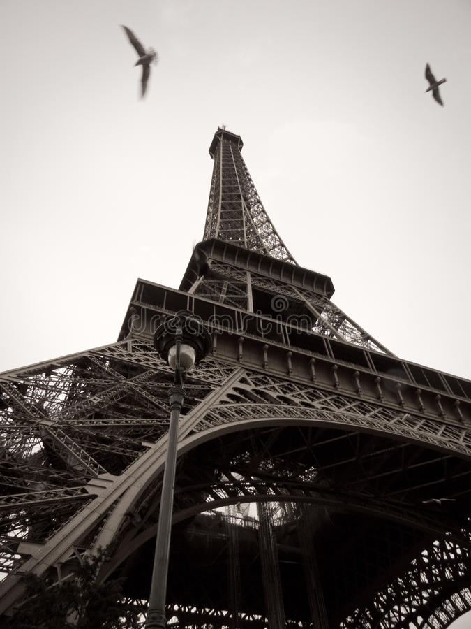 Black and White Eiffel Tower in the City of Paris royalty free stock images