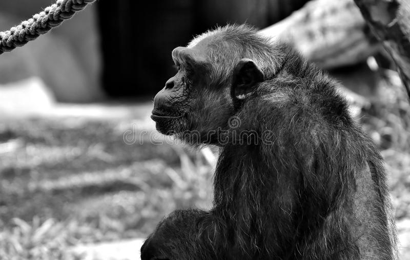 Black, Black And White, Fauna, Mammal stock images