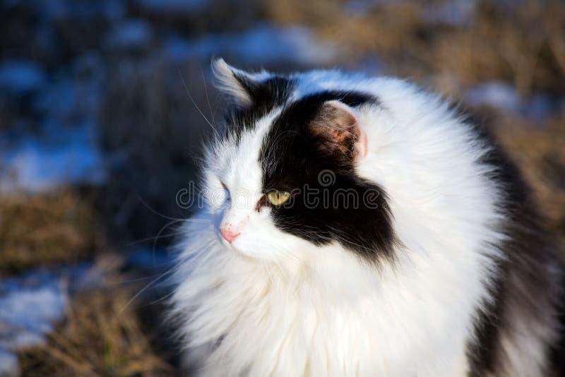Download Black White Feline stock image. Image of white, feline - 3932417