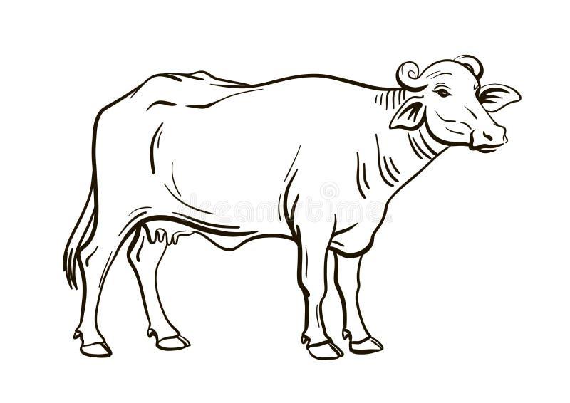 Black White Cows Stock Illustrations 776 Black White Cows