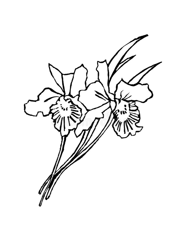 Black and white flower royalty free illustration