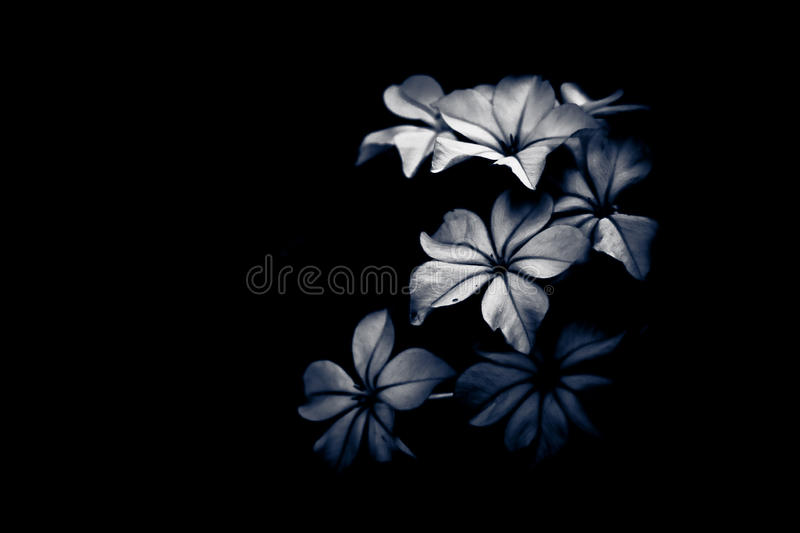 Black and white flower light and shade stock images