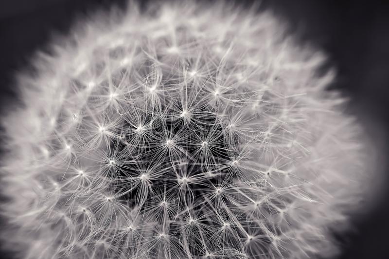 Black And White, Flower, Monochrome Photography, Plant stock images