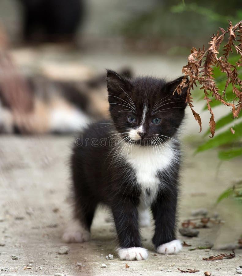 Black and white fluffy kitten standing near fern leaf. Selective focus stock image