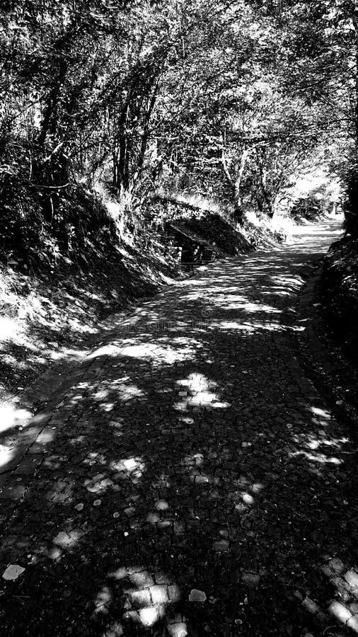 Black & White Forrest Shadows Walk royalty free stock photos