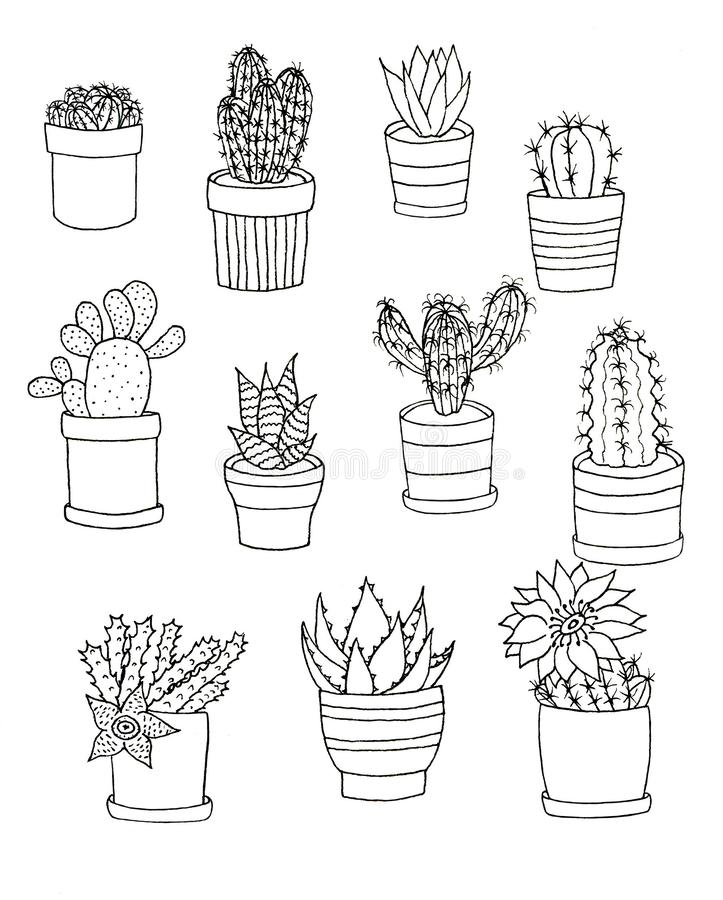 Hand drawn outline set of houseplants flower. Floral set cactus in pot isolated elements on white background vector illustration
