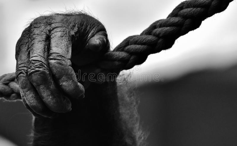 Black, Black And White, Hand, Monochrome Photography royalty free stock image