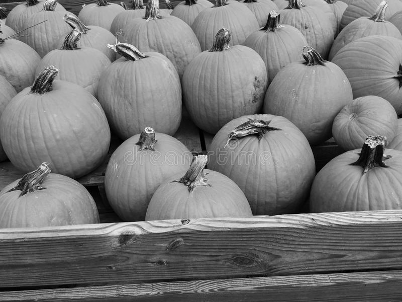 Black and white harvest royalty free stock images