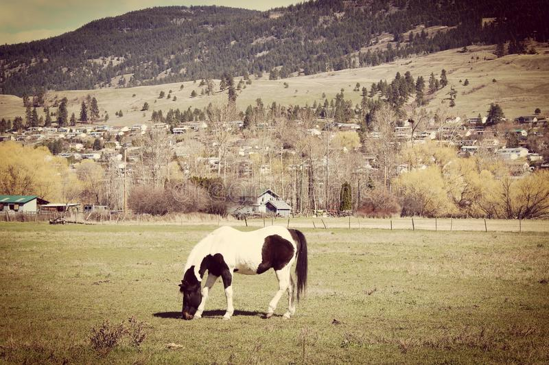 Closeup of black and white horse in field stock photography