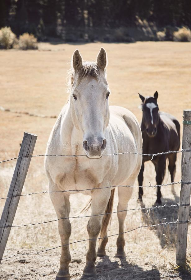 Butte - Horses_02 stock photography