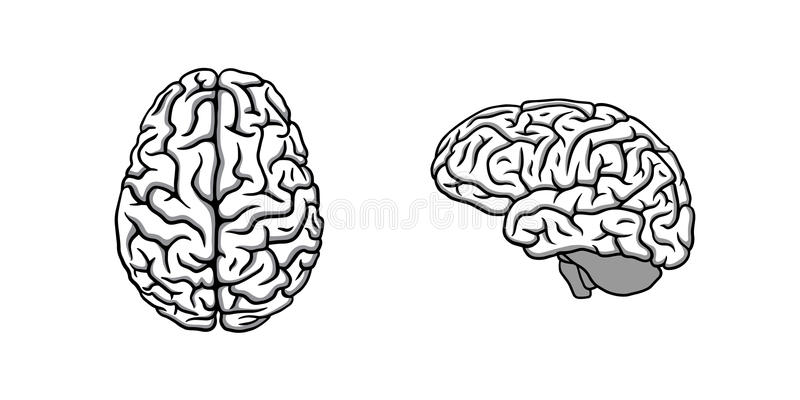 Black & white human brain in two perspectives illustration stock illustration