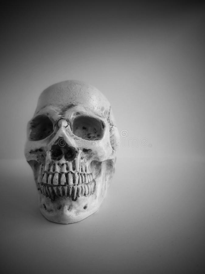 Black and white human skull isolated on a white background. Object face path clipping skeleton anatomy bone science physiology mouth death dead spooky jaw royalty free stock photo