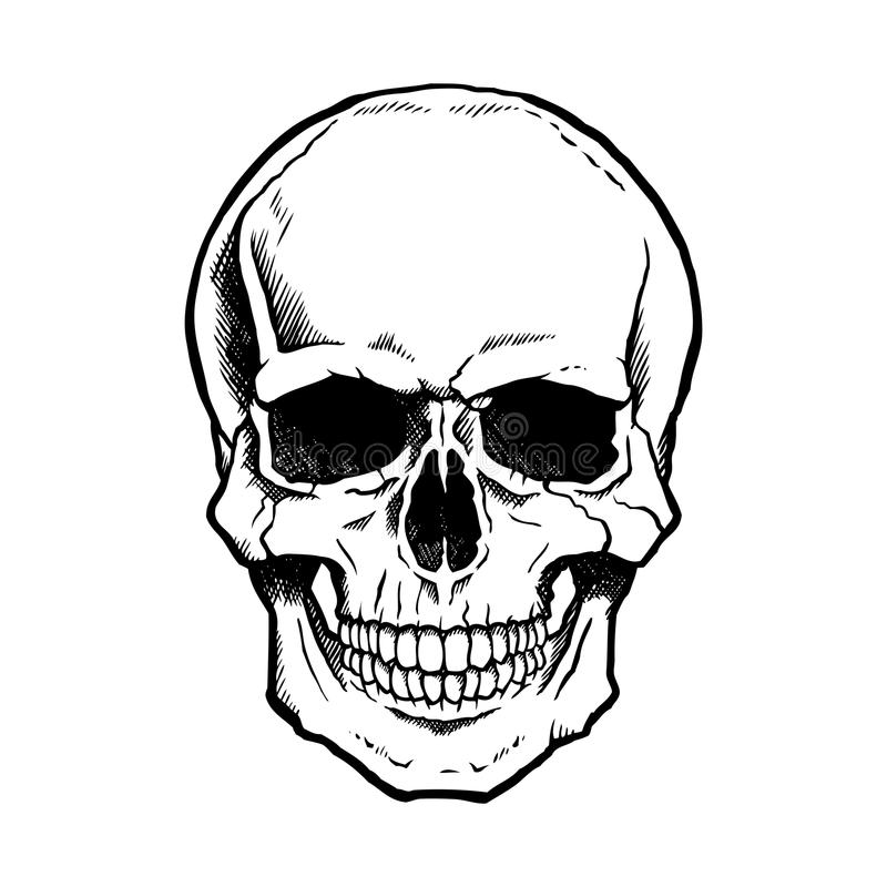 Black and white human skull with jaw royalty free illustration
