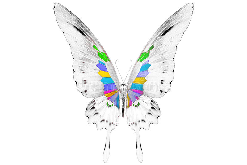 Black and white image of beautiful butterfly with colorful wings royalty free stock image