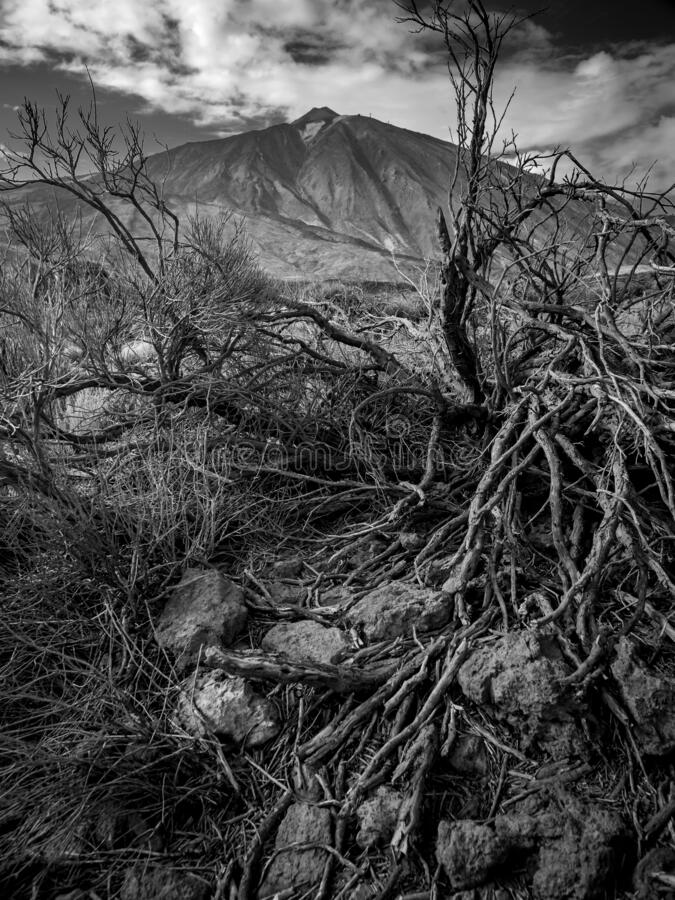 Black and white image of dry dead tree and arid rocky desert against big mountains. Black and white photo of dry dead tree and arid rocky desert against big stock photography