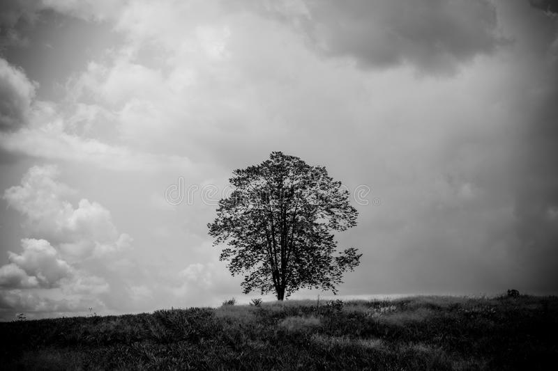 Black and white image of the only one tree stand among nature royalty free stock photography