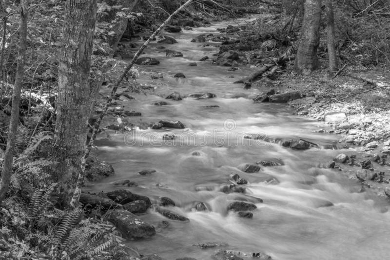 A Black and White image of Roaring Run Creek. Located in the Jefferson Nation Forest, Botetourt County, Virginia royalty free stock image