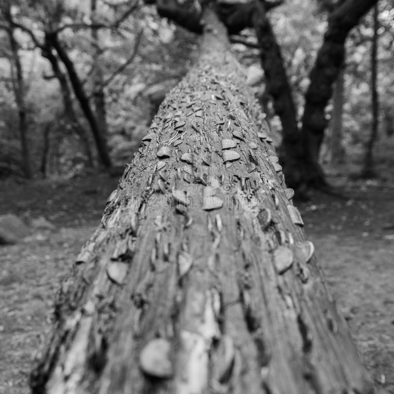A well laden money tree stock photos