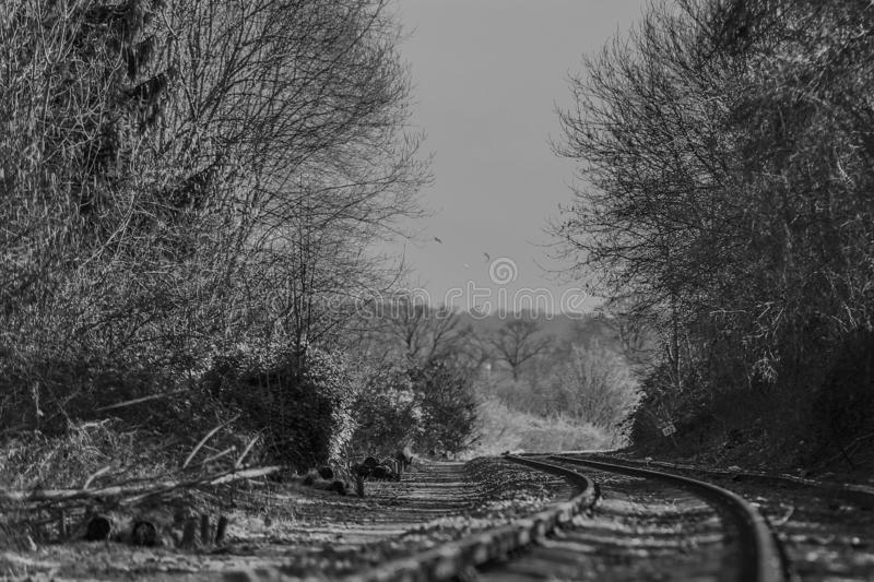 Black and white image of a train track with a curve between the forest with trees and bushes on both sides, beautiful day to refle stock images