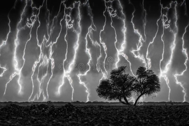 Black and white image of tree between storm royalty free stock images