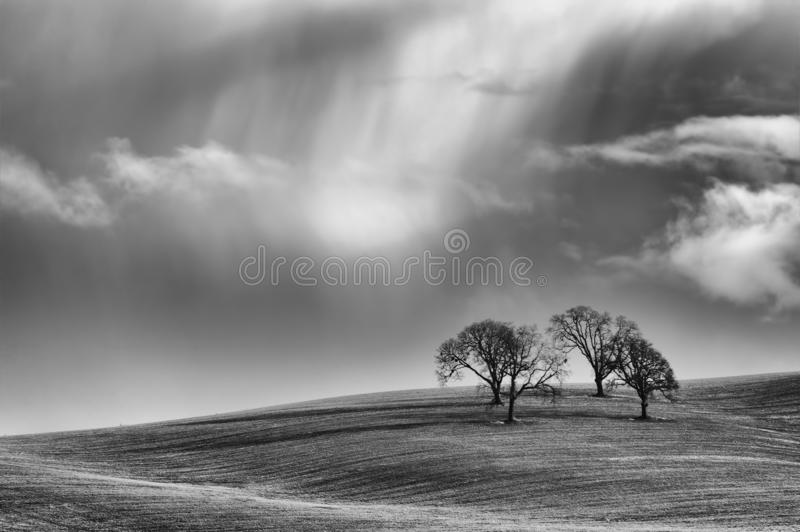 Black and white image of trees on hill under stormy skies stock photography